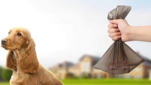 Comparatif meilleur sac à déjection canine