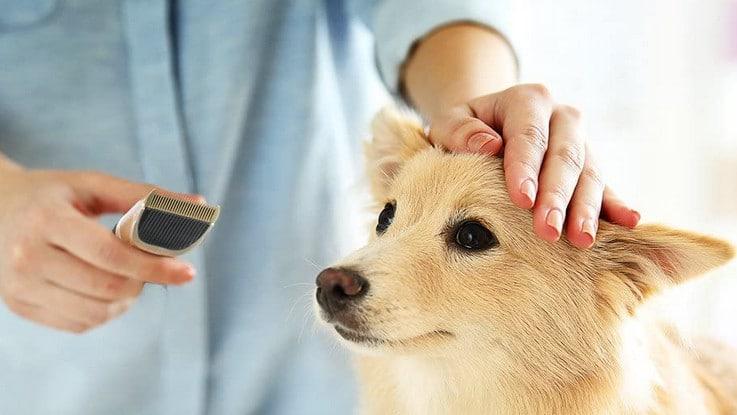 Comparatif meilleure tondeuse pour chien