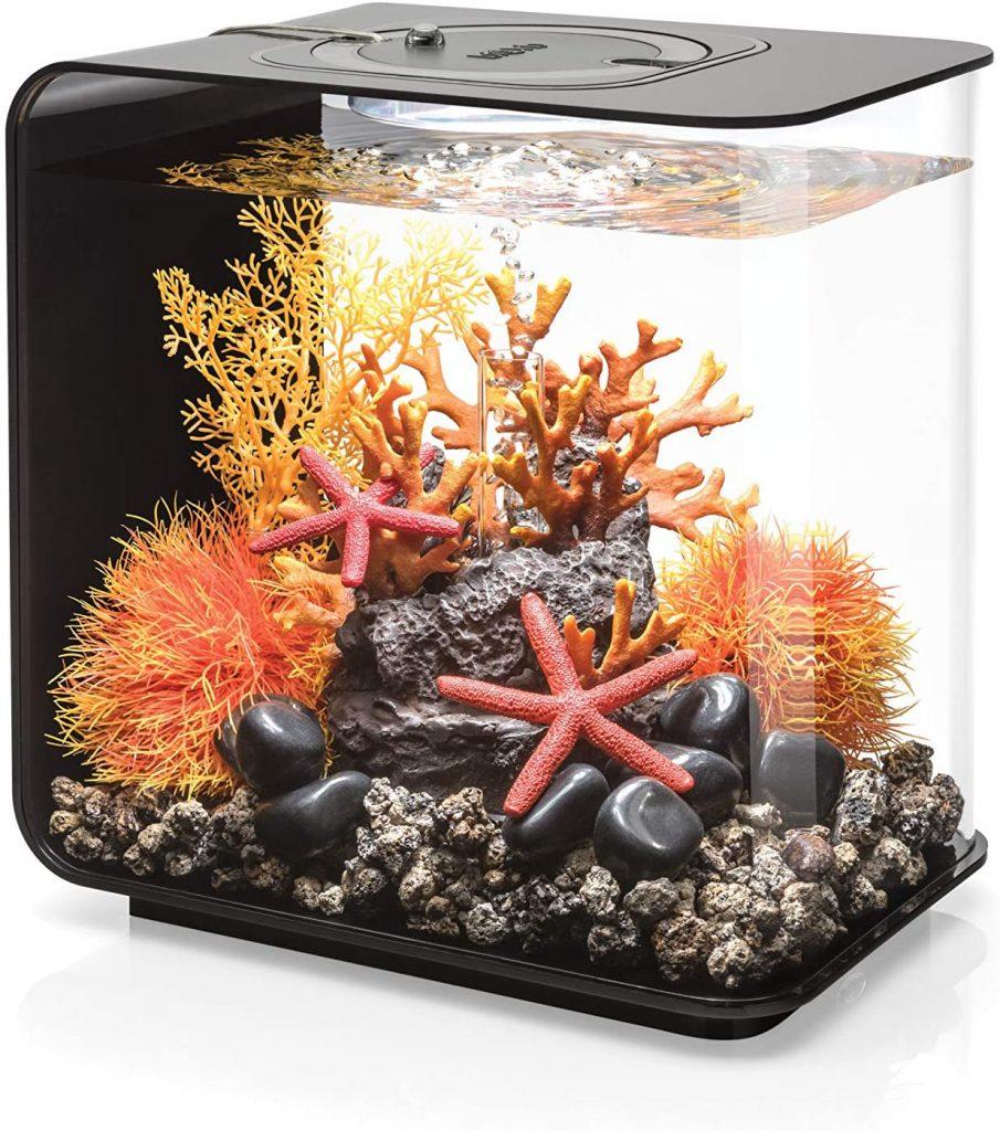 meilleur aquarium pour débutants
